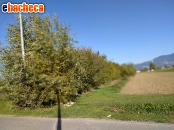 agricolo a lucca