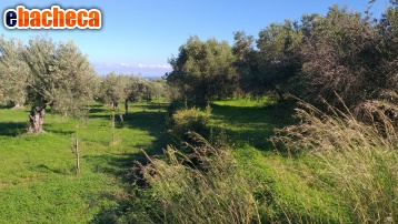 commerciale messina