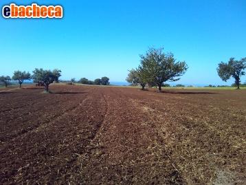 Anteprima Terreno agricolo/cascina