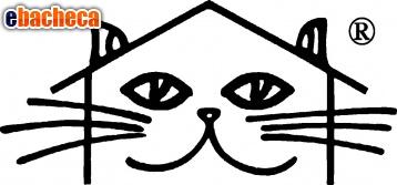 Anteprima L'hotel del gattino