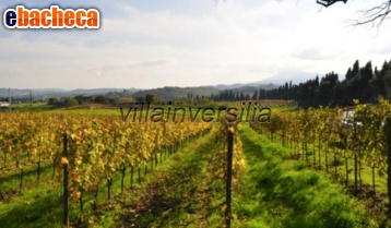 Anteprima Az.Agricola Montepulciano