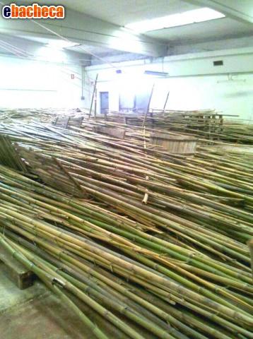 Anteprima Canne di bambù bambu