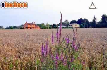 Anteprima Terreno Agricolo a Riese…