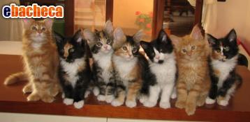 Anteprima Catsitter per le vacanze