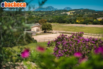 Anteprima Villa a Olbia di 650 mq