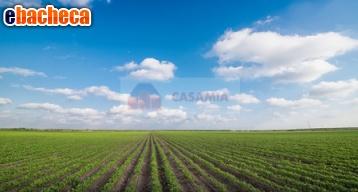 Anteprima Terreno Agricolo a…