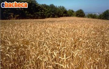 Anteprima Terreni in Romania
