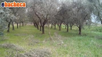 Anteprima Terreno Agricolo a Pisa…