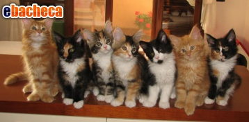 Anteprima Catsitter padova
