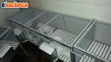 Anteprima Gabbie per conigli