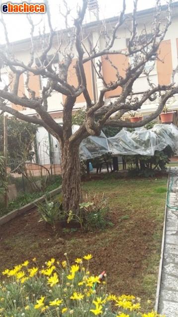 Anteprima Toscolano-Maderno villa…