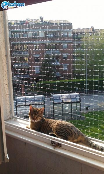 Anteprima Rete di protezione gatti