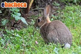 Anteprima Allevamenti conigli selva
